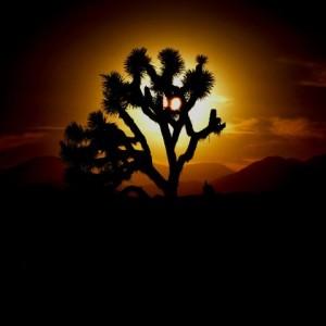 Alien Joshua Tree