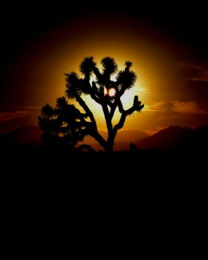 Alien Joshua Tree