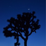 Venus and Moon Over Joshua Tree