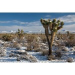 renee-white-desert-photo-on-metal-24x36-1380_result