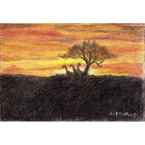 James_ Arcacia Sunset_ 2.5×3.5_ 45