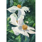 Morris-Matilija Poppies-WC-26x20-450