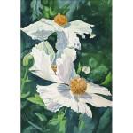Morris-Matilija Poppies-WC-26x20-450