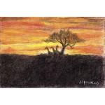 James_ Arcacia Sunset_ 2.5x3.5_ 45
