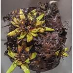 MURPHY - Cactus Bloom - 9x9x8 - 175_